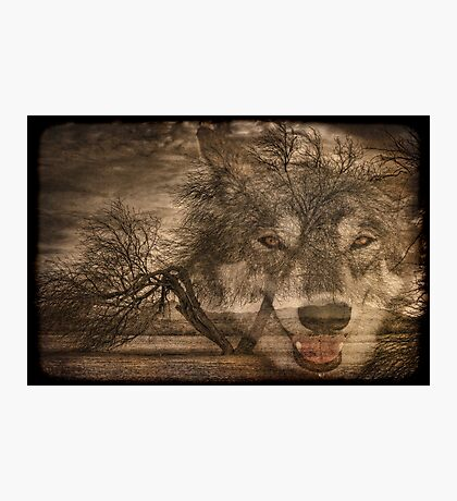 Willow Wolf Photographic Print