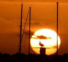 """""""Sunbird"""" by Meg Hart"""