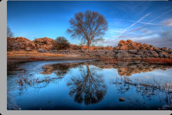 Rock Wall Tree Reflect by Bob Larson
