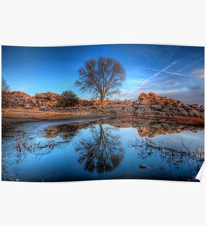 Rock Wall Tree Reflect Poster