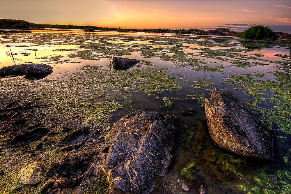 Algae vs Rocks by Bob Larson