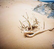Twisted driftwood, Tarkine coast Tasmania by Phil ONeill
