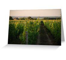 Through the Vineyards Greeting Card