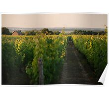 Through the Vineyards Poster