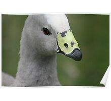 Goose on the loose. Poster