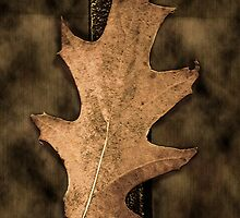 The Fallen Leaf by ediaz
