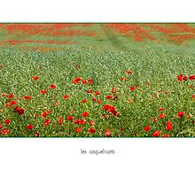 Les Coquelicots  card by Erwin G. Kotzab