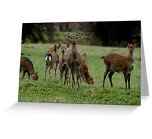 Here Come The Girls! Greeting Card