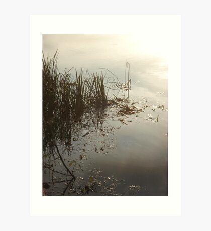 Reeds on Econfina Art Print