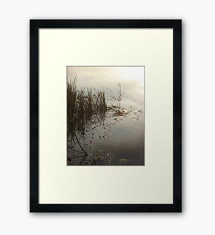 Reeds on Econfina Framed Print