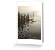 Reeds on Econfina Greeting Card