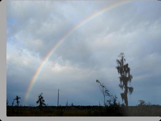 Rainbow over Econfina Creek 12/09 by May Lattanzio