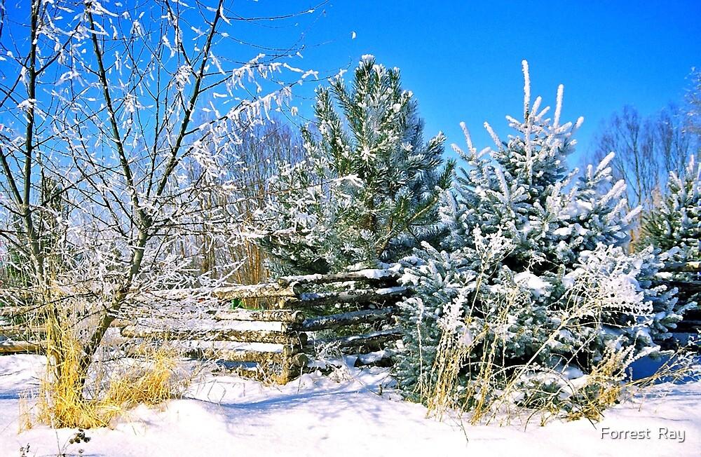 Idaho Winter Scene 1, USA by Forrest  Ray