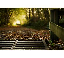 Tree Tunnel Photographic Print
