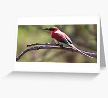 Carmine Bee-eater, South Luangwa National Park, Zambia Africa Greeting Card