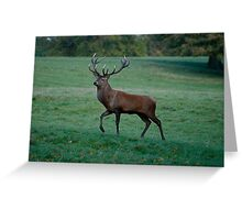 King of the Pack! Greeting Card