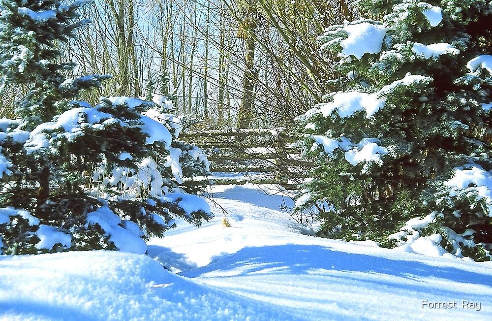Idaho Winter Scene 2, USA by Forrest  Ray