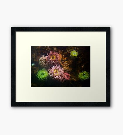A Sea of Colors - Colorful Soft Coral Framed Print
