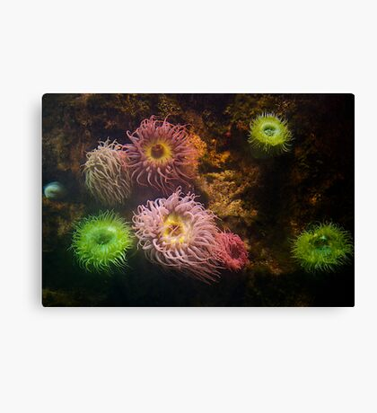 A Sea of Colors - Colorful Soft Coral Canvas Print