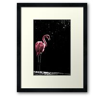 Flamingo in Pink Framed Print