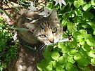 Abby in the Garden by abbycat