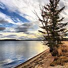 Lone Beach Trees by Vickie Emms