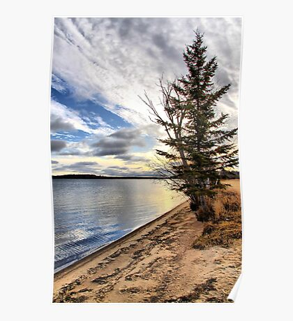 Lone Beach Trees Poster