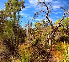 Bushwalking by HG. QualityPhotography