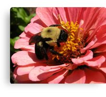 'Bumble Bee and Zinnea' Canvas Print