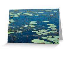 Lily Pads on Fogg Dam, NT Greeting Card