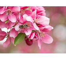 A Bee I see Photographic Print