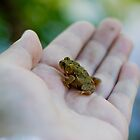 A tiny toad in hand is worth.... by ibullock