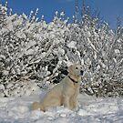 Winter wonderland by Trine
