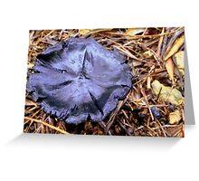 Black medow mushroom..... Greeting Card