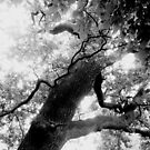 Noise of the leaves by Lena Weiss