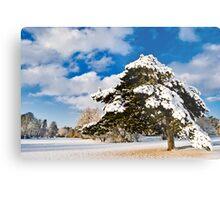 Winters Tree 2! Metal Print
