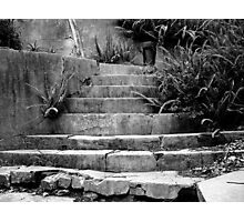 Little Path To Nowhere Photographic Print