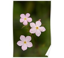 Small Flowers... Poster