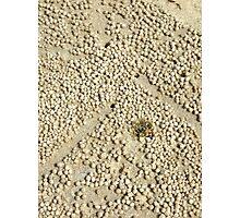 Crab balls - Brunswick Heads, NSW Photographic Print