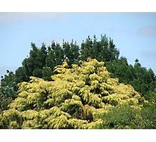 Tree on Tree Photographic Print