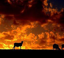 Feeling Sheepish  by Joel Aston