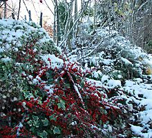 Red Berries in Snow by Dawn OConnor