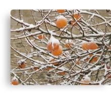 Snow and Kaki Fruit Canvas Print