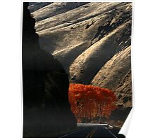 Canyon Road's Fall Colors Poster