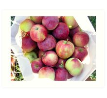 apples in a basket Art Print