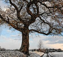 Winter Tree by Simon Duckworth