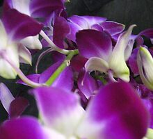 Tangled Orchids by MarianBendeth