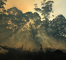 Montagu bushfire , far nor west Tasmania , Australia by phillip wise