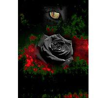 Feline Eyes Photographic Print