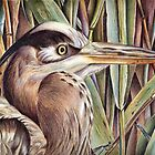 Blue Heron  by Valentina Gatewood